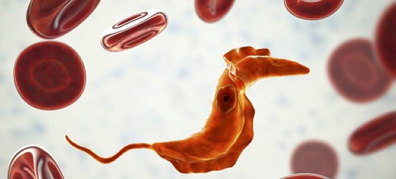 Combate à doença de Chagas terá investimento de US$ 20 milhões 1